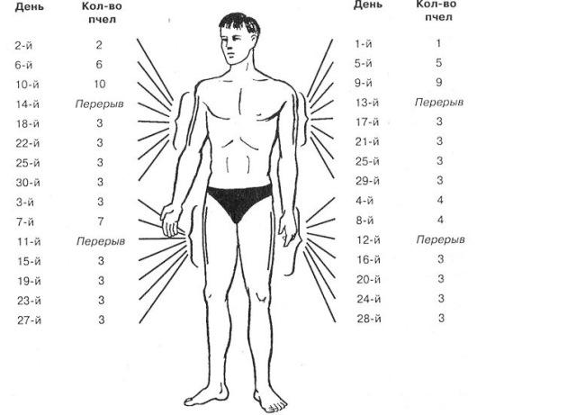 Лечение укусами пчел - тонкости апитерапии, польза и вред