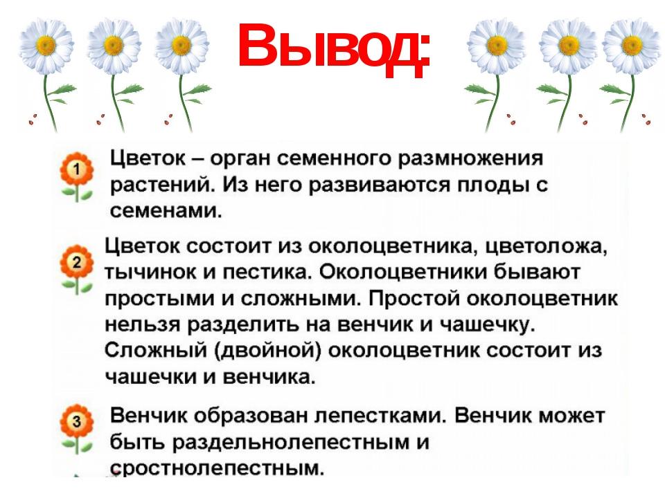 Красивые и ароматные: что такое цветы?