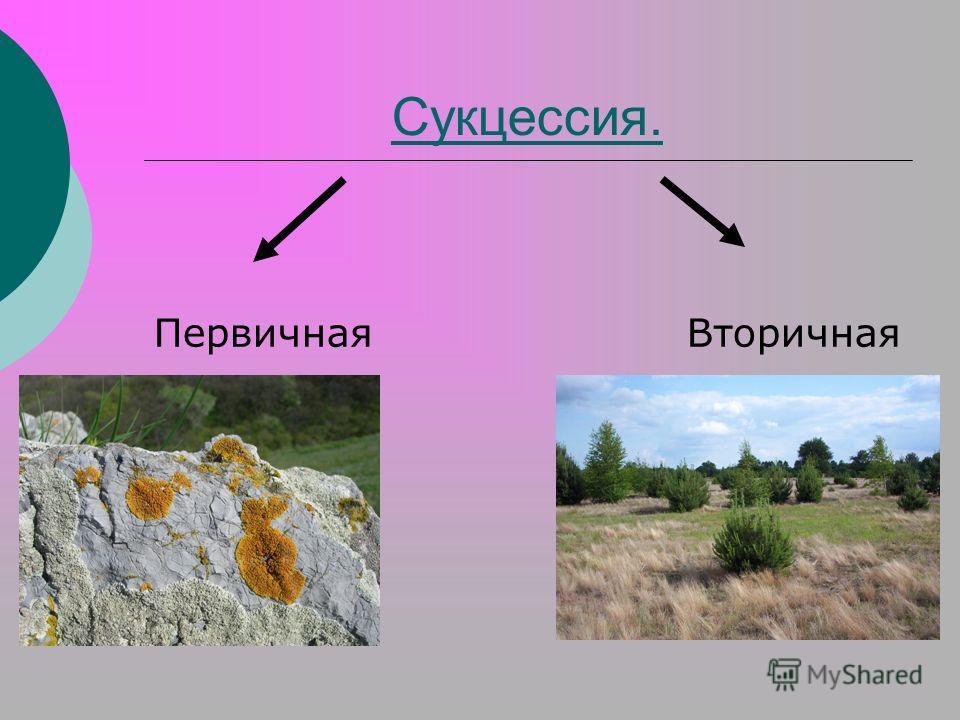 Экологическая преемственность - ecological succession - qwe.wiki