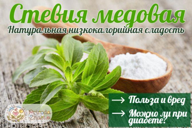 Стевиозид: польза и вред, состав заменителя сахара и применение