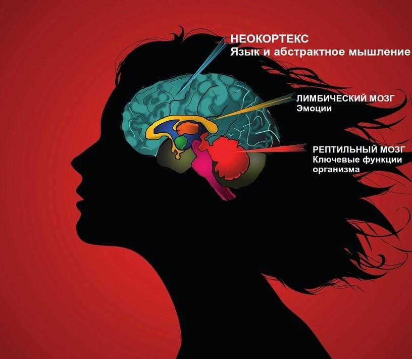 Неокортекс – рациональный мозг. бессознательный брендинг. использование в маркетинге новейших достижений нейробиологии