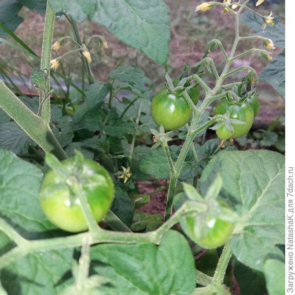 Чиа семена - полезные свойства, противопоказания, употребление