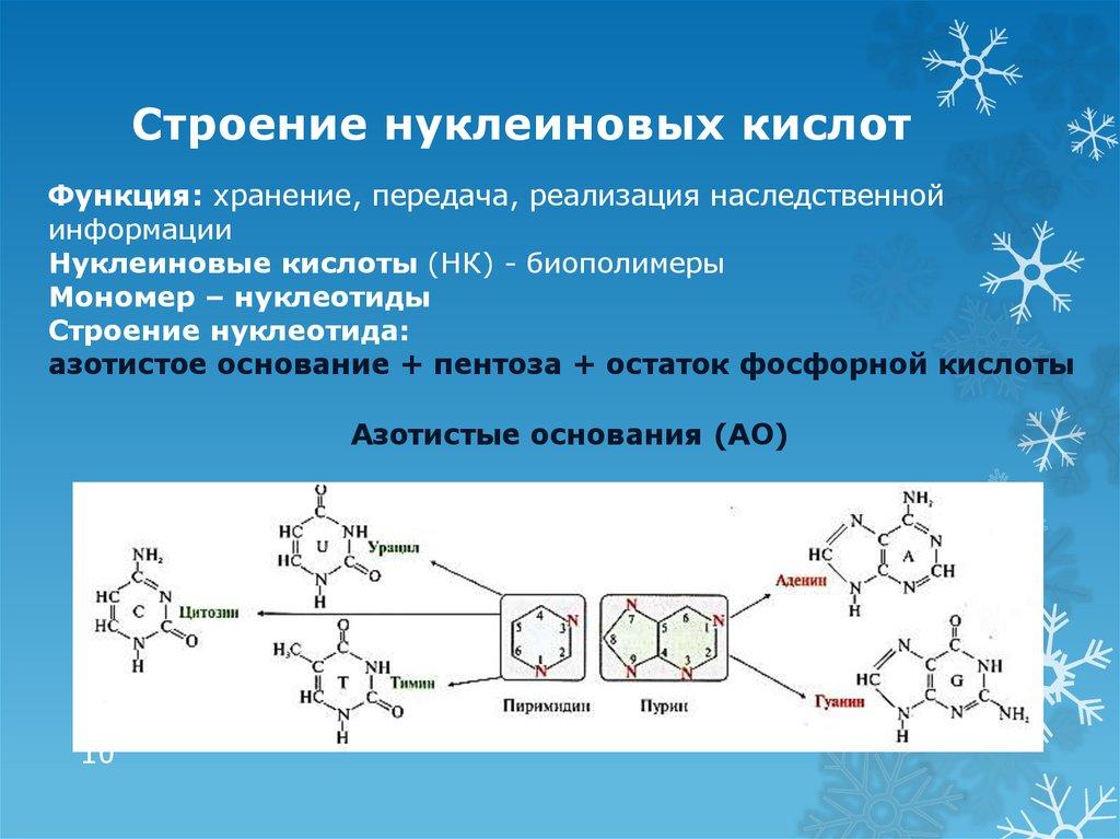 Разница между нуклеиновой кислотой и аминокислотой
