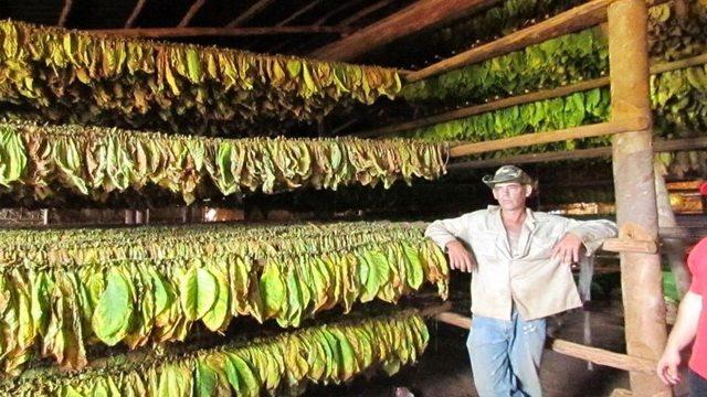 Трубочный табак — википедия. что такое трубочный табак