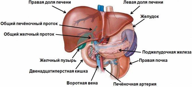 Диффузные изменения паренхимы поджелудочной железы - паренхима и признаки диффузных изменений: умеренные изменения