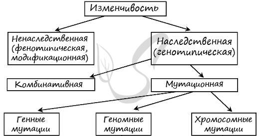 9.1. мутационная изменчивость: ее особенности. виды мутаций. генные и хромосомные мутации