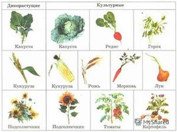 Что такое растительность