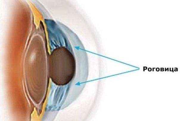 Роговица глаза - что это такое (строение и функции - фото)