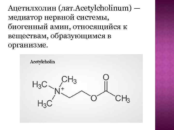 Ацетилхолин - важный медиатор мозга   активный туризм