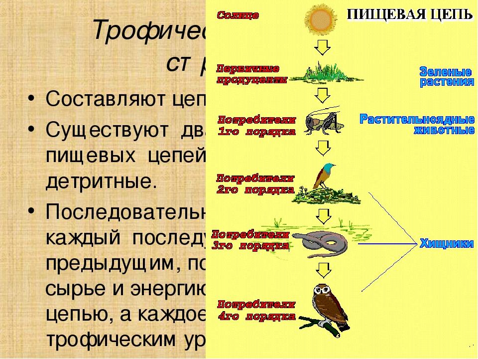 Пищевая цепь — википедия с видео // wiki 2