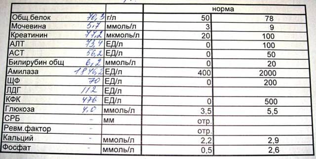 Амилаза в крови: норма у женщин и мужчин, что показывает анализ