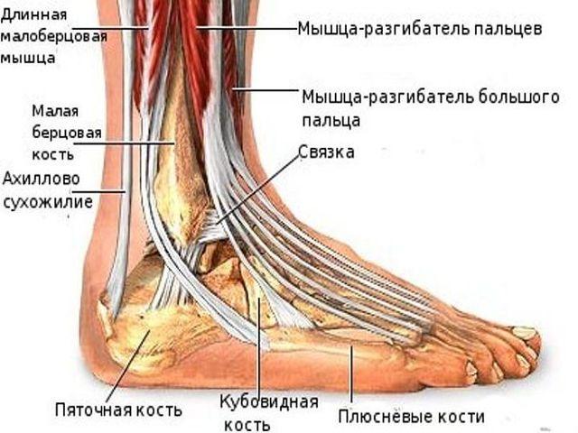 Где находится щиколотка на ноге у человека и что это такое, фото