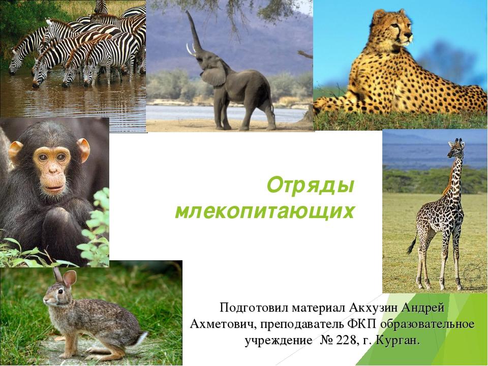 Млекопитающие животные: список, описание отрядов