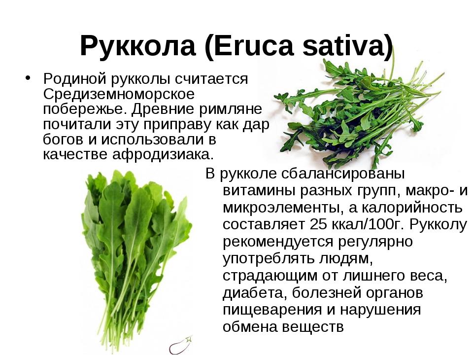 Руккола: польза и вред для здоровья, рецепты салатов +отзывы