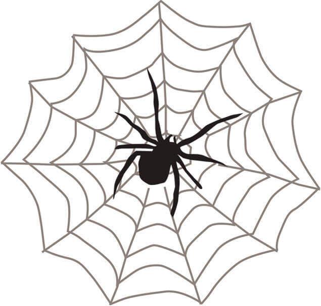 Как и для чего пауки делают паутину. откуда берется паутина у паука? зачем паук плетет паутину – основные функции