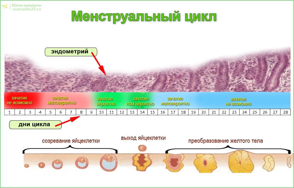 Цикл месячных (менструальный). норма дней у женщин после 30-40 лет, девушек. как правильно считать, когда начинается, почему стал короче, причины