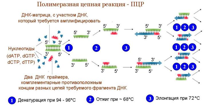 Где и как сделать тест на коронавирус – сдать анализ covid-19 в 2020 году