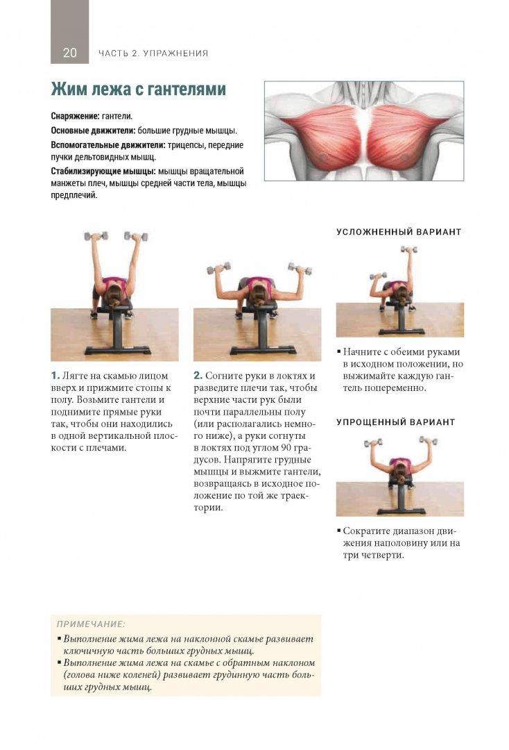 Мышцы кора и тест на лордоз