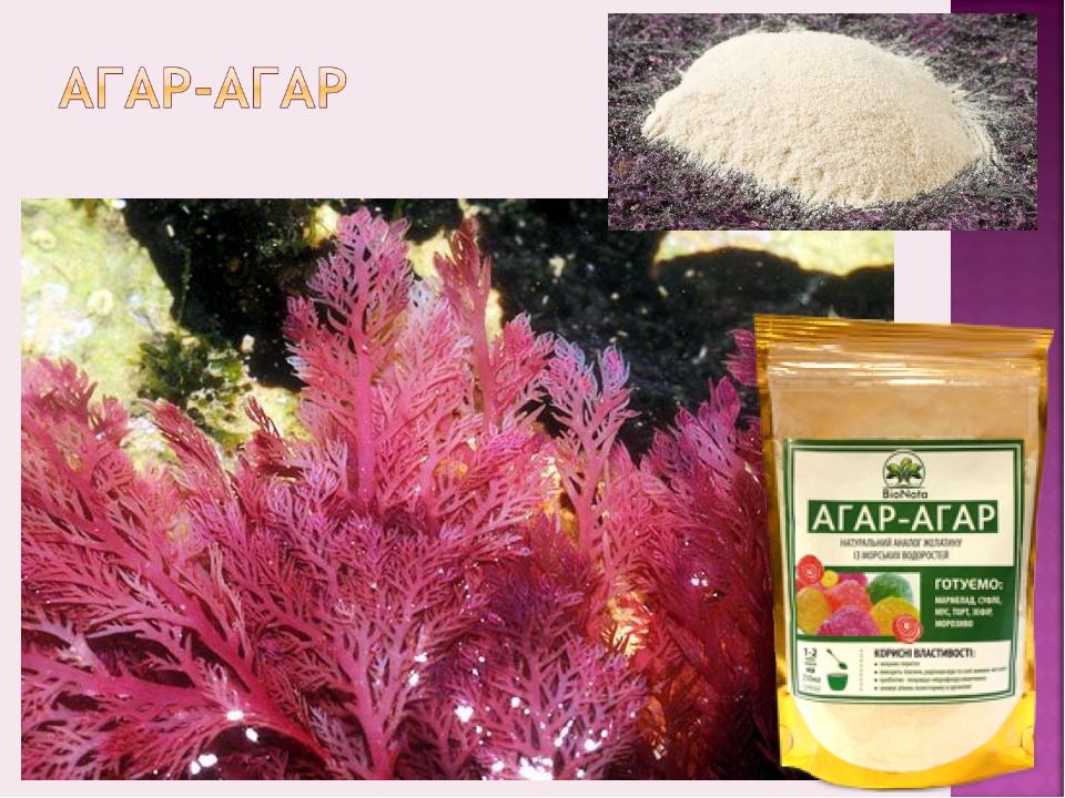 Агар-агар - что это такое, применение для домашних рецептов
