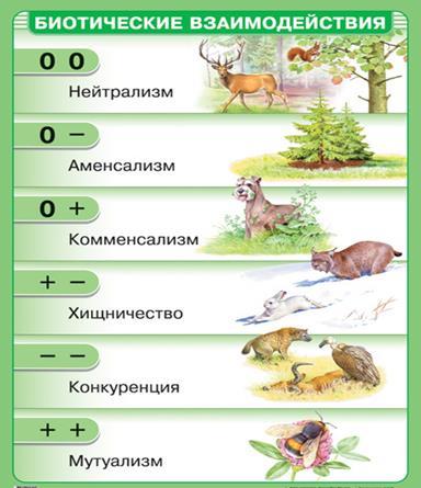 Типы отношений между организмами