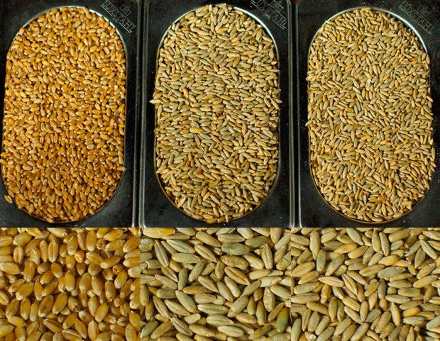 Твердая наука — журнал «агротехника и технологии» — агроинвестор