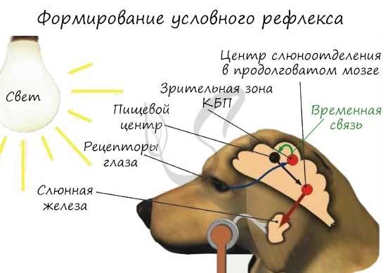 ❗ интересные факты о павлове - экспресс газета