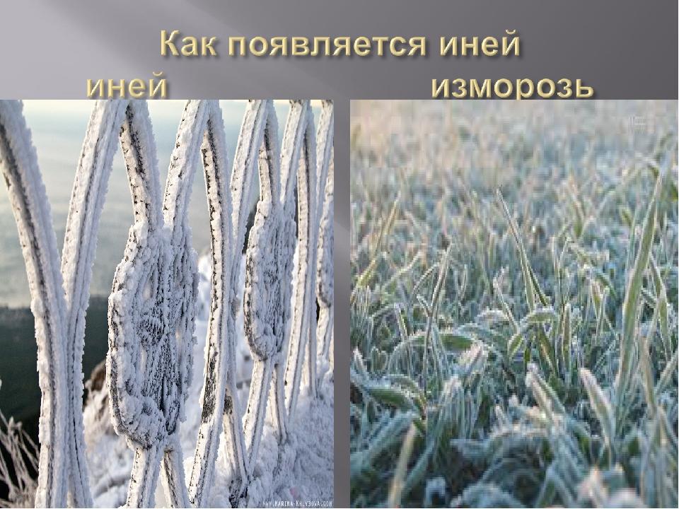 Чем отличается иней от изморози?