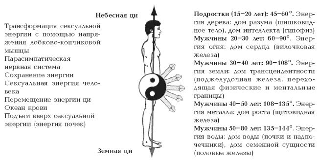 Упражнения для эрекции: тренировка мужской силы