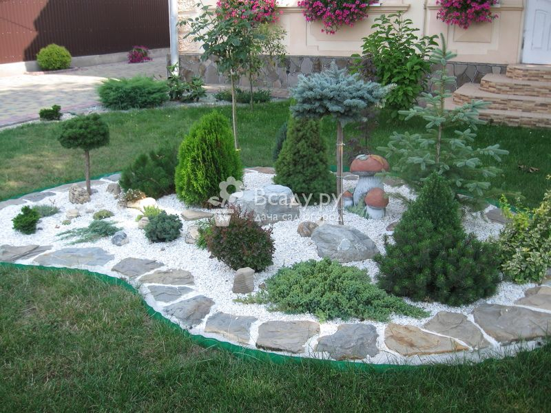 Виды и названия хвойных растений для сада, описание кустарников и фото