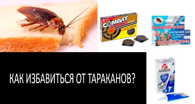 Виды тараканов, живущие в россии, в том числе квартирных