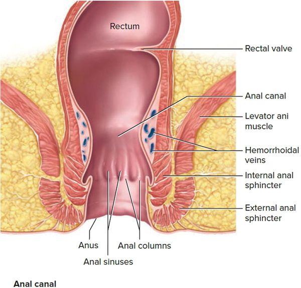 Острый парапроктит - лечение и симптомы - симптомы, диагностика, лечение, профилактика