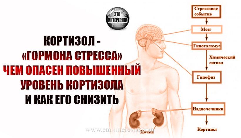Повышенный кортизол у женщин: причины, симптомы и лечение. - гормоны и их функции