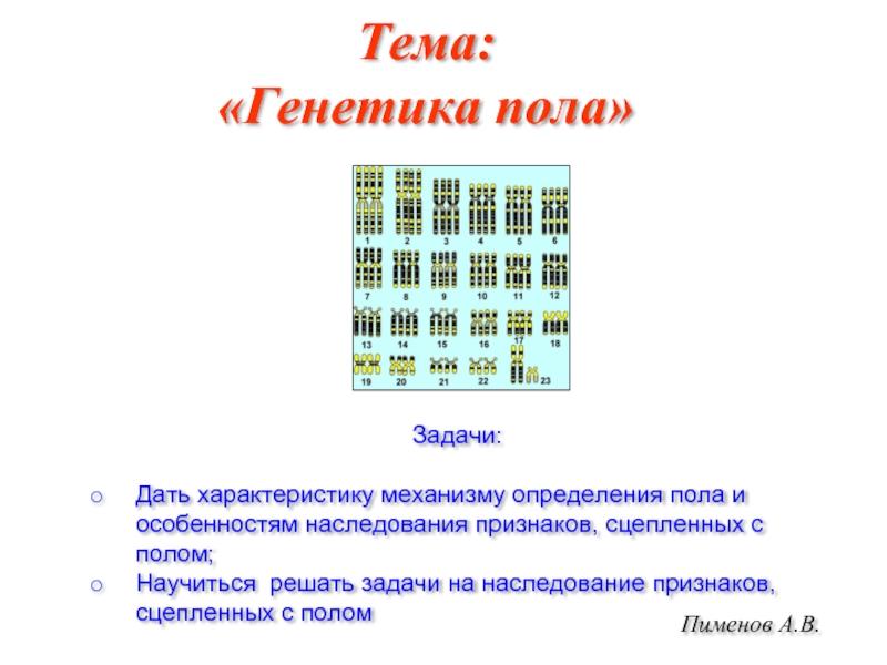 Половая хромосома - sex chromosome