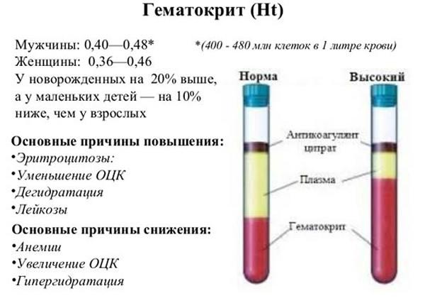 Норма гематокрита как показатель здоровья
