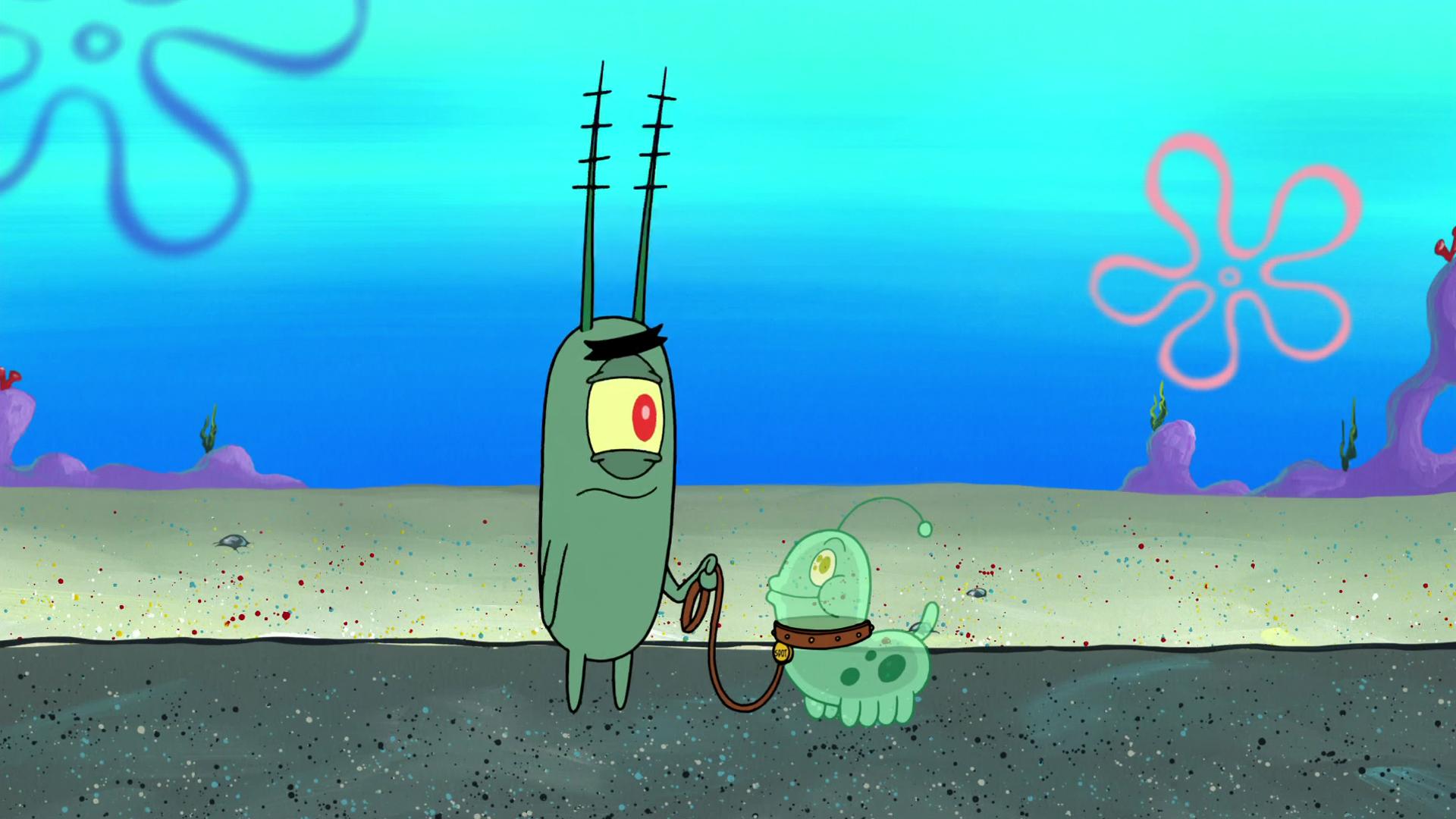 Планктон — википедия. что такое планктон
