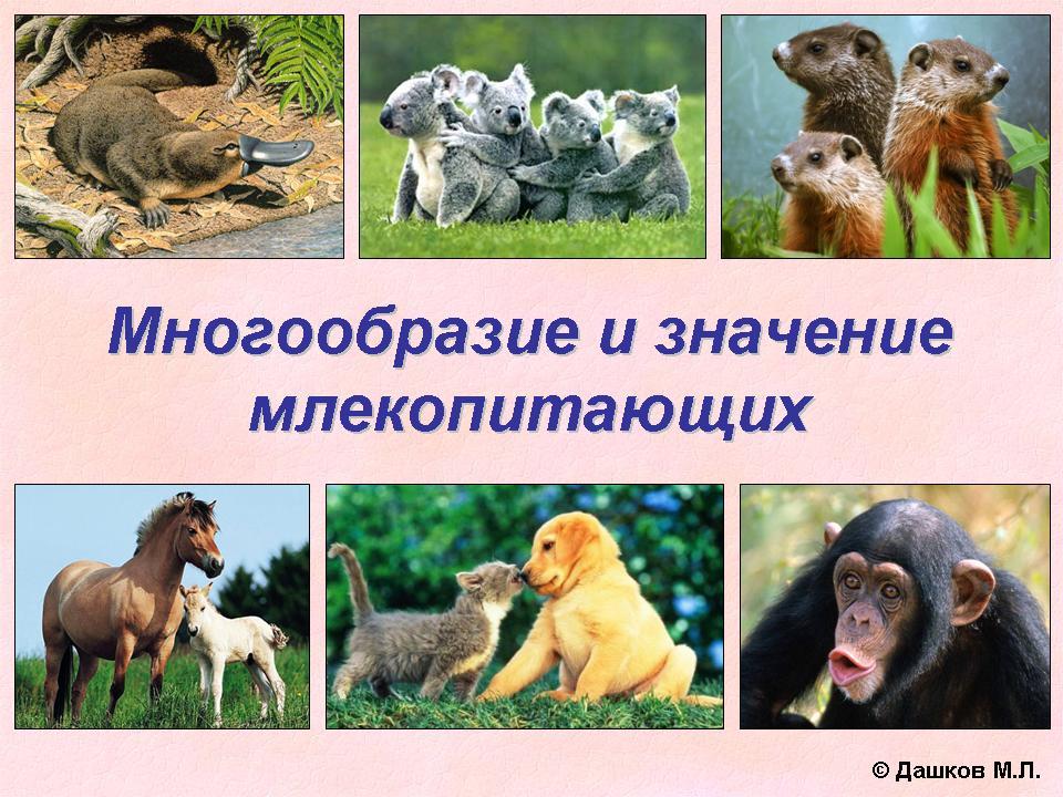 Особенности и распространение млекопитающих животных