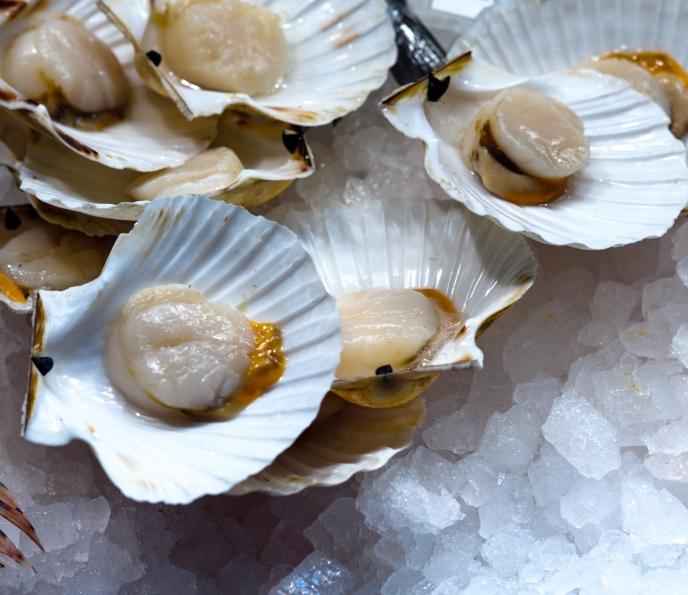 Морской гребешок | мир животных и растений
