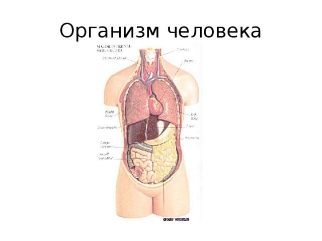 Что такое организм?