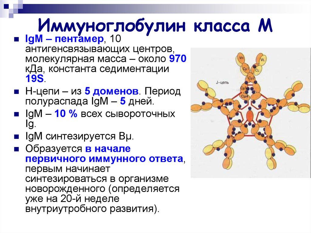 Внутривенное введение иммуноглобулина - показания и противопоказания