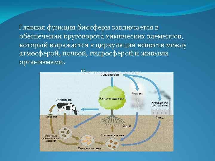 Биосфера. круговорот веществ в биосфере. глобальные изменения в биосфере. | егэ по биологии
