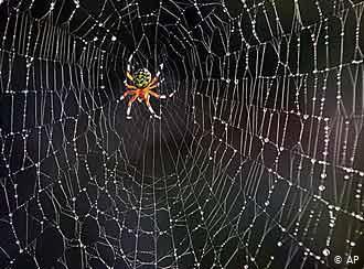 Из чего сделана паутина?. все обо всем. том 1