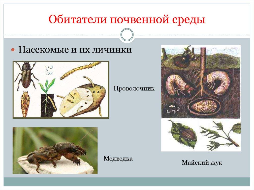 Организм и среда обитания