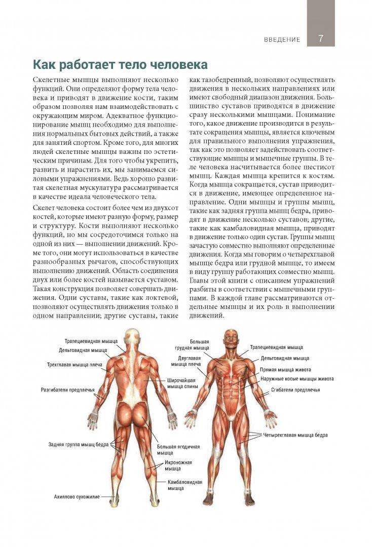 Что являют собой мышцы кора и как их укрепить?