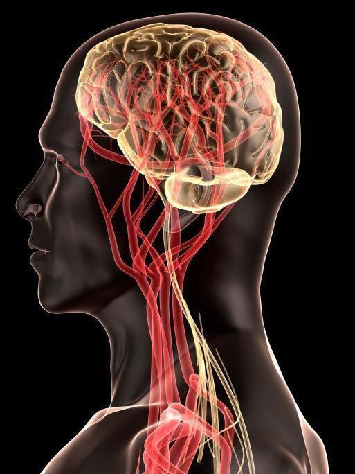 Уздг сосудов головы и шеи: как и для чего выполняют процедуру