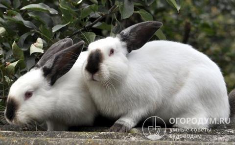 Кролики — породы и виды