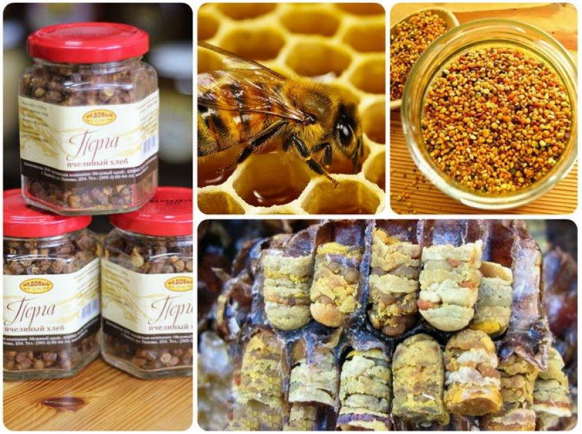 Пчелиная перга: полезные свойства, как принимать