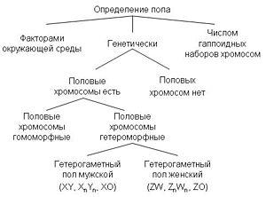Особь (фильм)