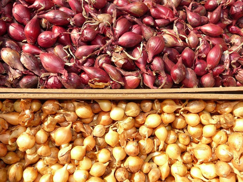Капуста кольраби: описание, полезные свойства, особенности выращивания, как едят, рецепты - sadovnikam.ru