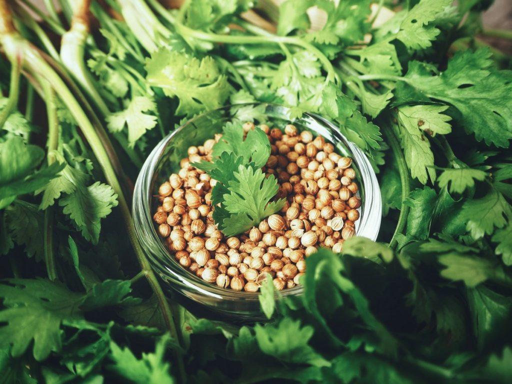 Кориандр — что это такое, как выглядит растение, чем отличается от кинзы
