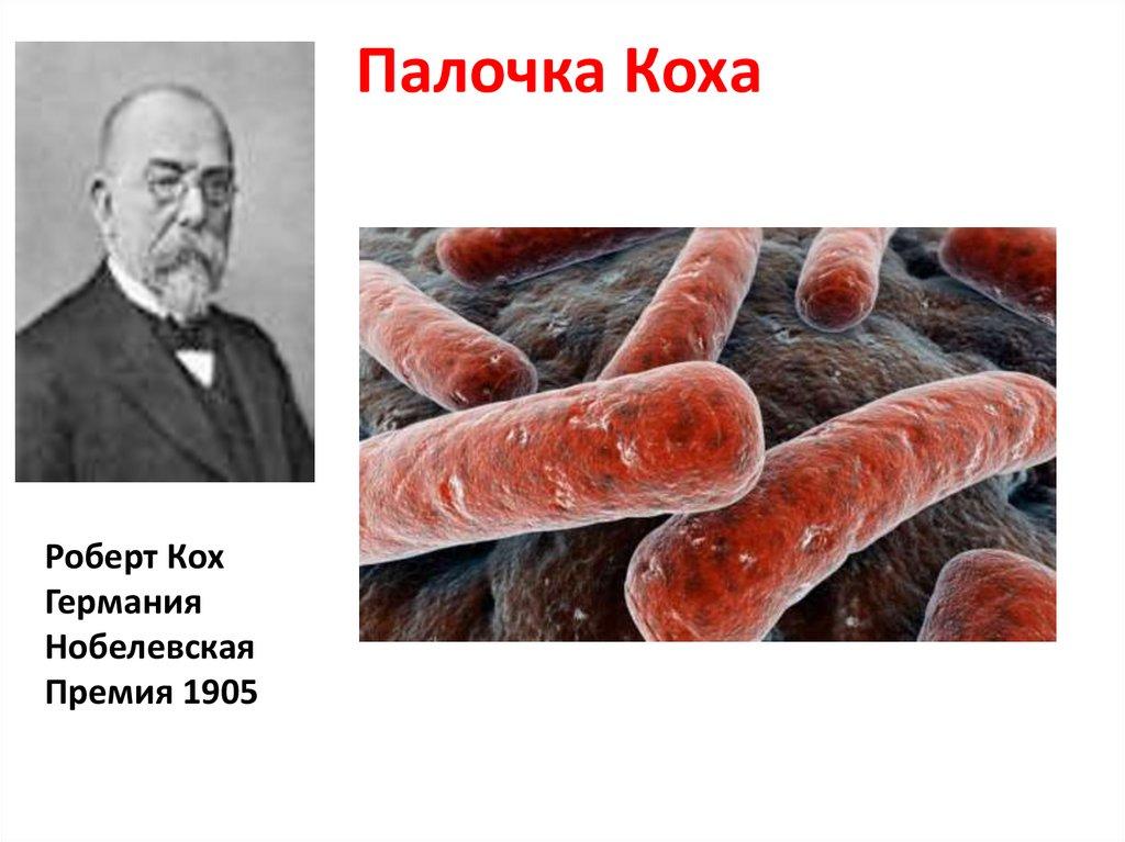 Бактерия туберкулеза: сколько живет возбудитель заболевания